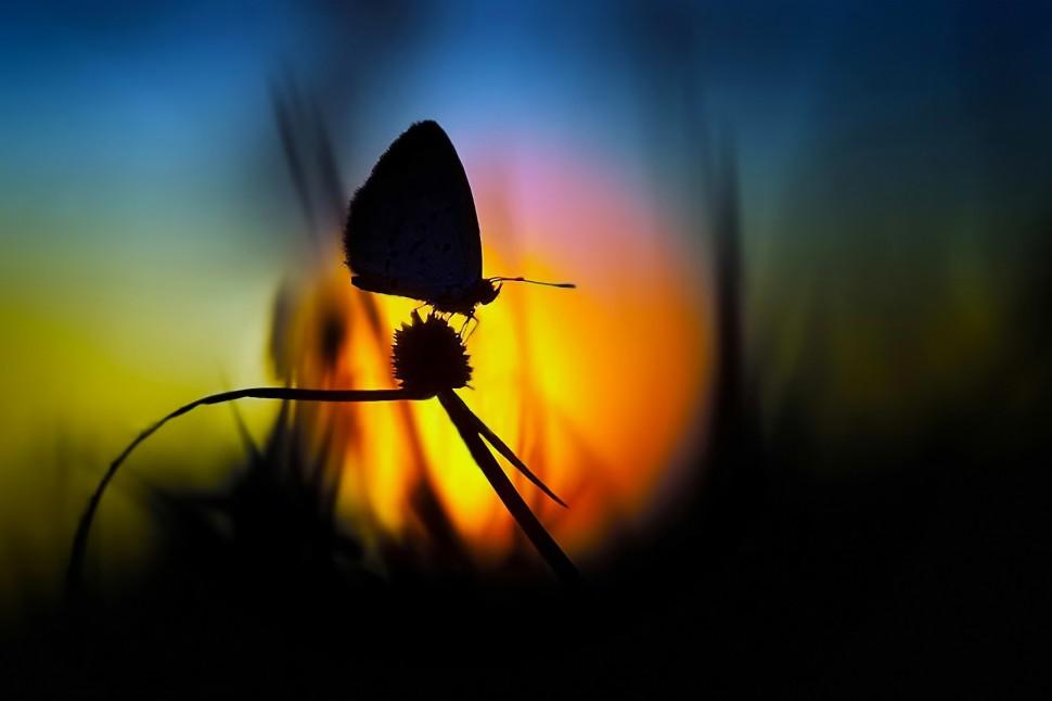 nature-soleil-aube-fleurs-papillons-silhouette-646x970